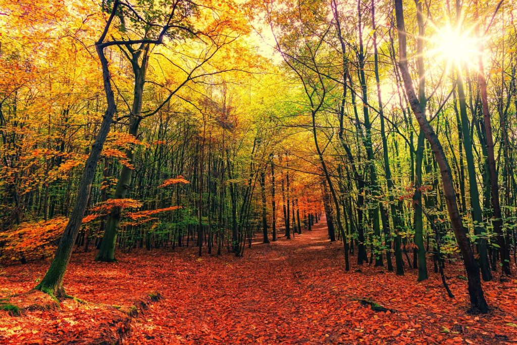 w sercu lasu